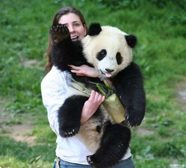 3-day Chengdu & Dujiangyan Base Panda Volunteer Program Tour