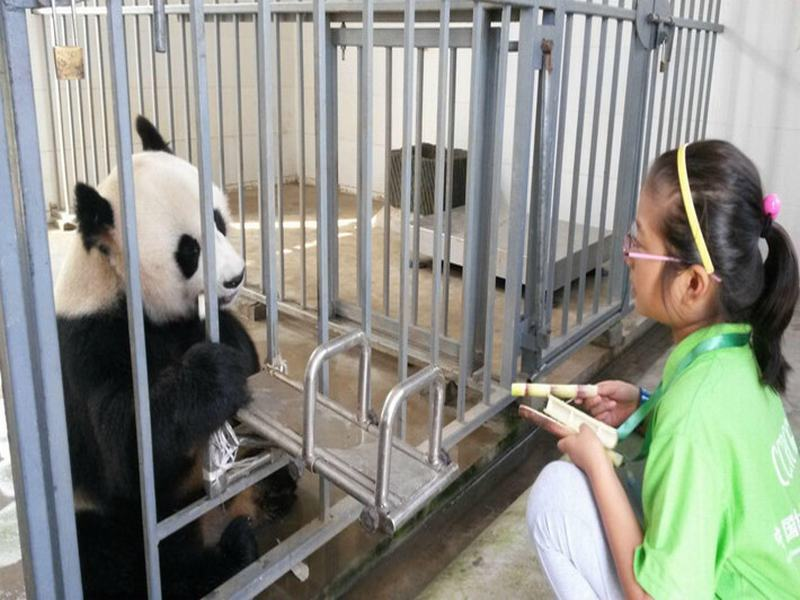 1-day Experience Dujiangyan Panda Base Volunteer Program